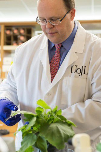 U of L pharmaceutical research with tobacco
